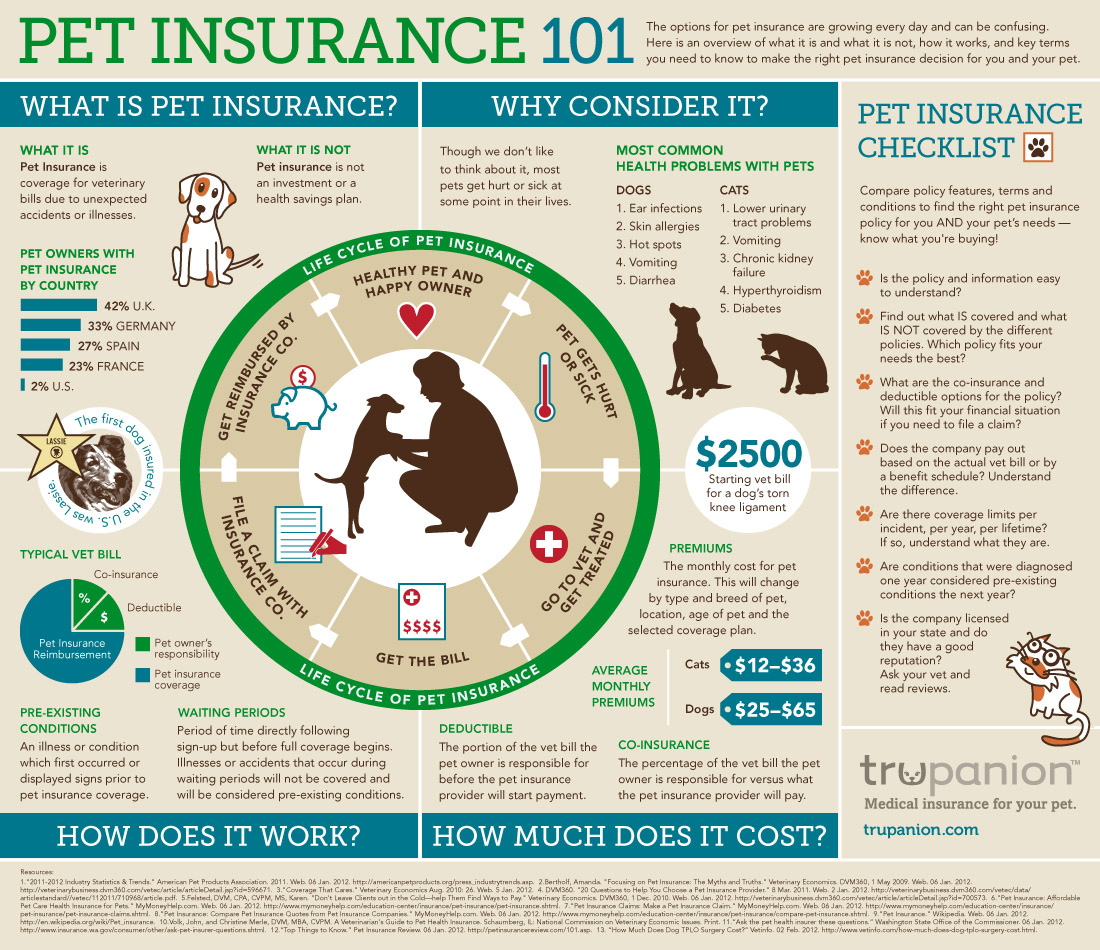 pet-dog-insurance-infographic