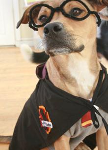 Harry-Potter-Dog-Costume1