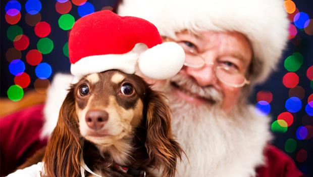 dog-santa-photo_jbmk2p