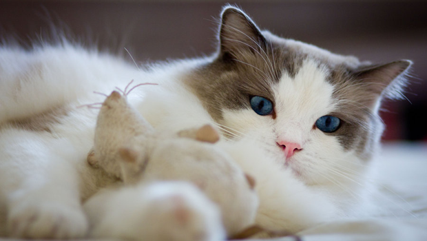 rag-rat-toy-cute-pet-cat