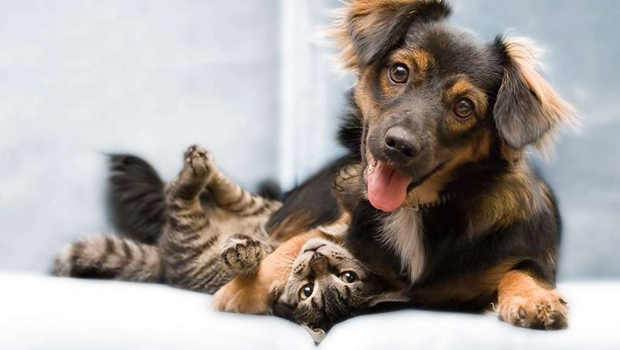 dog-and-cat-on-bed