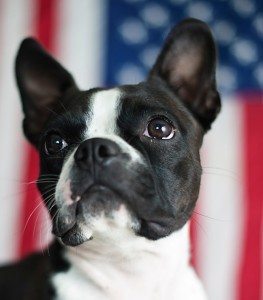 Patriotic-dog-iStock_000027088511Small-263x300